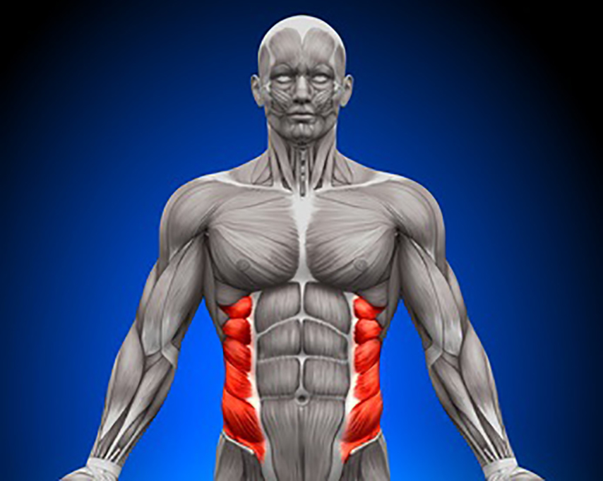 External Oblique - Usable abs